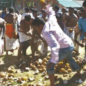 On brise des noix de coco sur le parcours des dévots. (Photo Gérard Coderre)